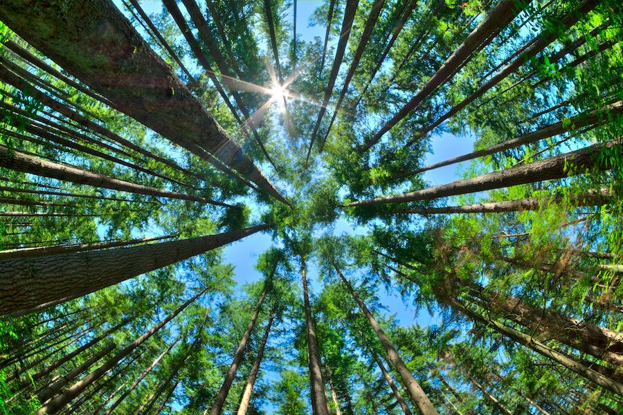 Environmental Sustainability + Economic Opportunity (1)